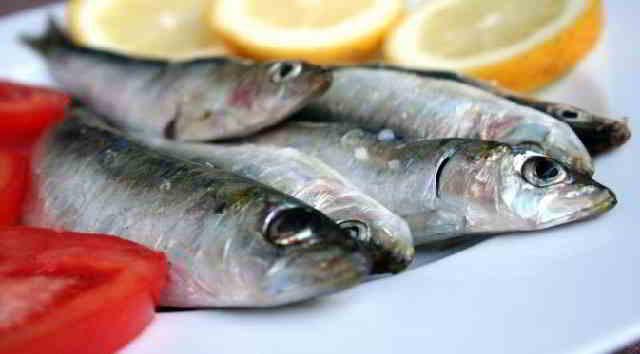 Nama Latin Ikan Sarden