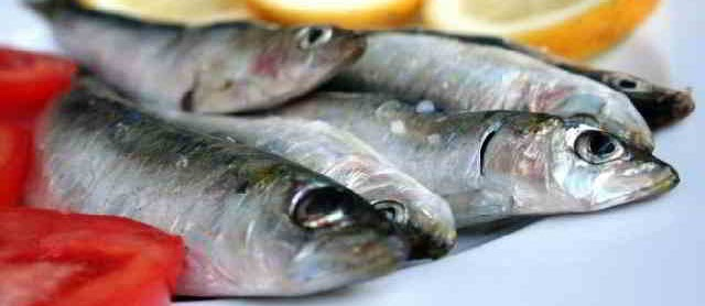 Nama Latin Ikan Sarden (Sardinella Aurita)