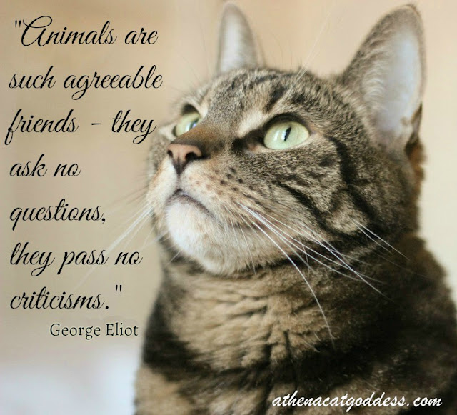 Animals are such agreeable friends