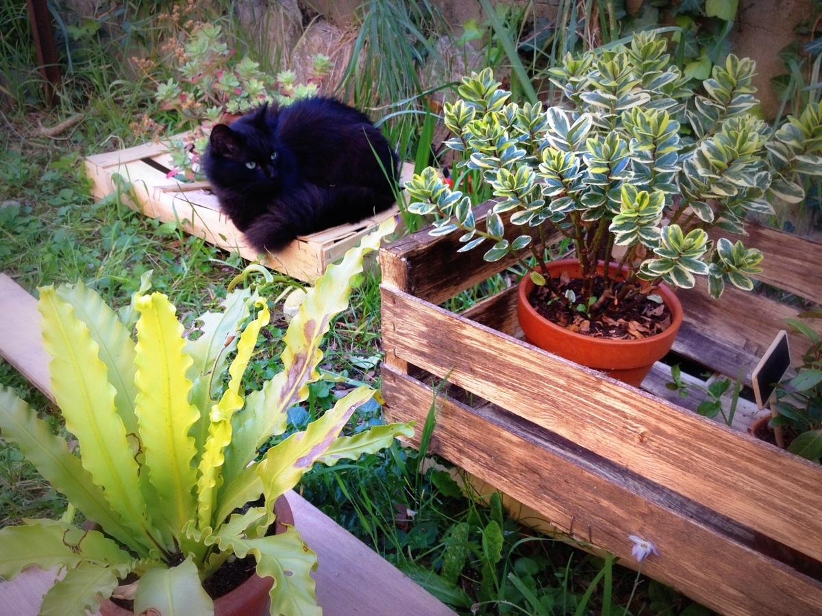 Black Cat Puchkin