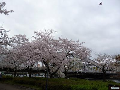 桜と櫻宮橋