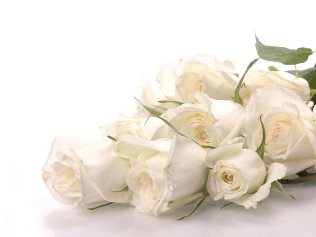 bó hoa hồng trắng đẹp nhất 2017 11