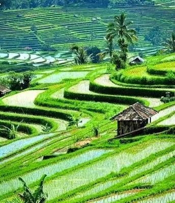 https://www.sahabatulfah.com/2019/03/ayo-ke-sumatera-barat-disinilah-negeri-terindah-dunia.html?m=1