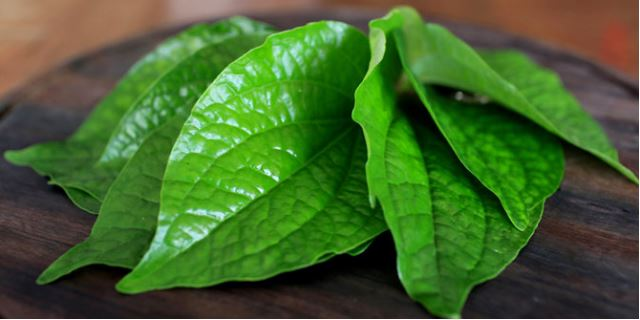 Usir bau mulut di bulan puasa dengan mengunyah daun sirih