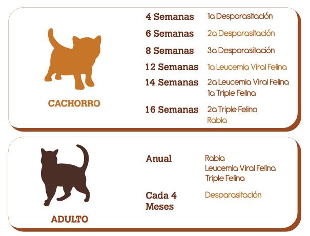 en esta imagen se observa el plan preventivo en gatos
