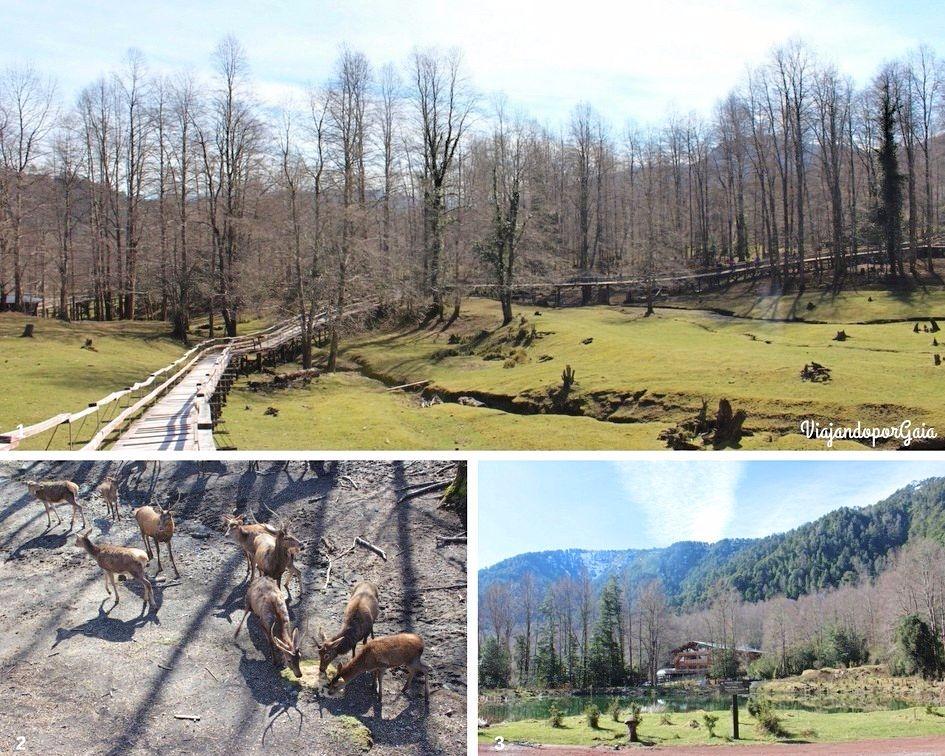1. Sendero del criadero de Ciervos 2. Ciervos 3. Punto de encuentro entre los miradores de ciervos y jabalíes, el acceso al teleférico y al Museo de Los Volcanes.