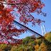 紅葉が見ごろな秋の竜神大吊橋へ行ってきました。
