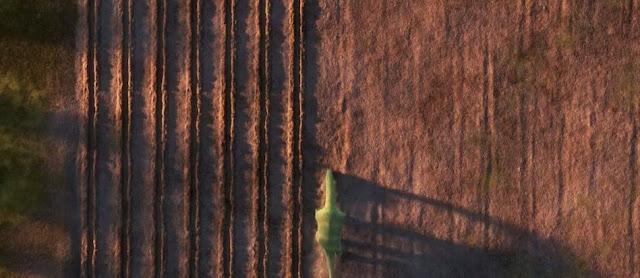Brontosaurus sedang mencangkul Tanah
