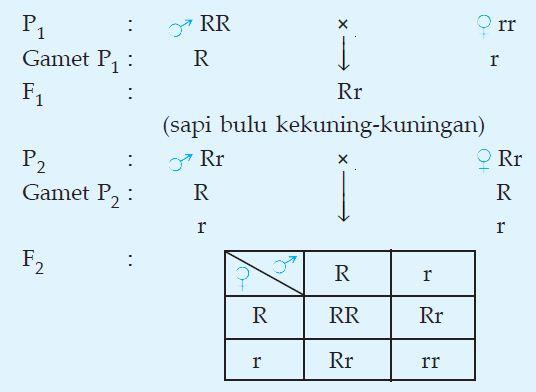 Pengertian dan Contoh Persilangan Dihibrid dan Monohibrid Lengkap