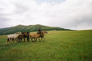 ratsastusmatka, Mongolia, mongolianhevonen