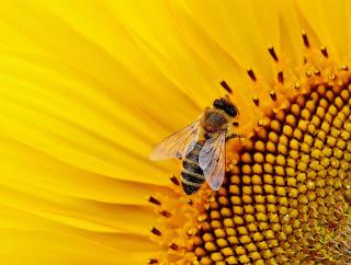 Celui qui butine comme une abeille...