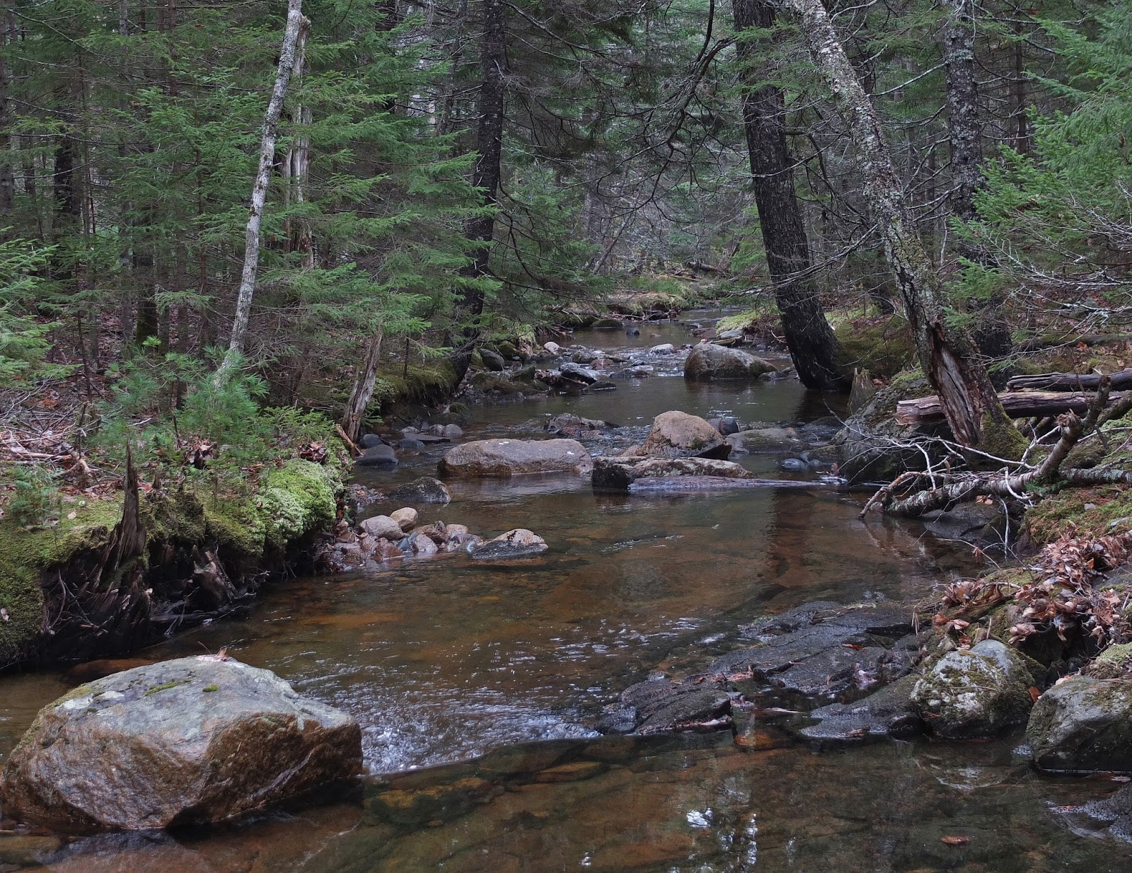 hiking in maine with kelley 11 27 15 eliot mt harbor brook