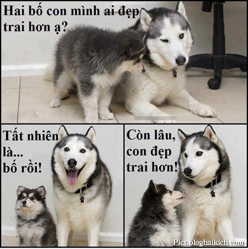 Những chú Chó ngộ nghĩnh, hài hước