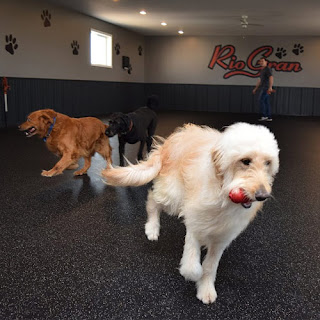 rubber flooring greatmats dog flooring