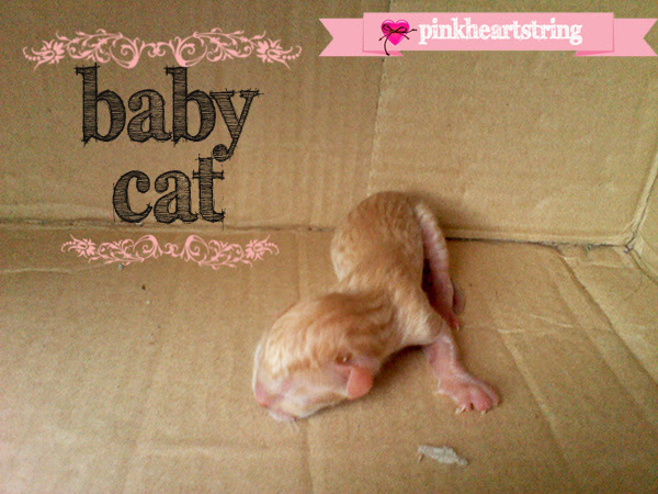 Mommy Cat Gives Birth