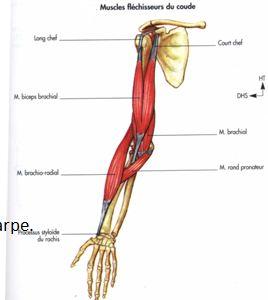 poignet fracture symptôme
