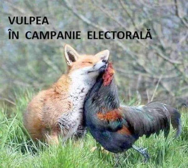 Vulpea in campanie electorala