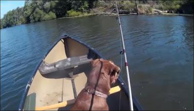 Πήγε για ψάρεμα με τον σκύλο του και δείτε τι έπαθε