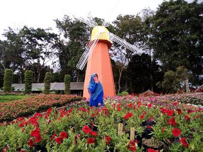 Lokasi Taman Bunga Celosia Bandungan Semarang