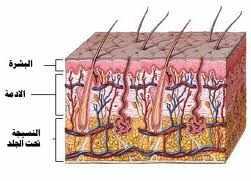 أهمية الجلد في منع تسرب الجراثيم إلى الجسم