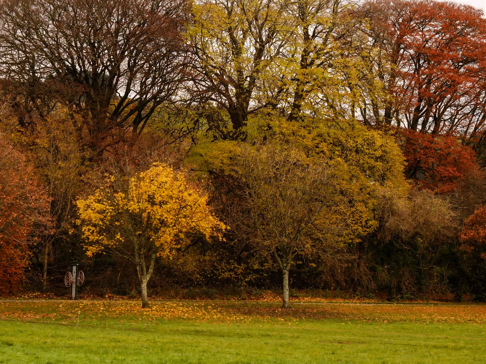 Four trees in a row with different colour foliage in Ballincollig, County Cork.
