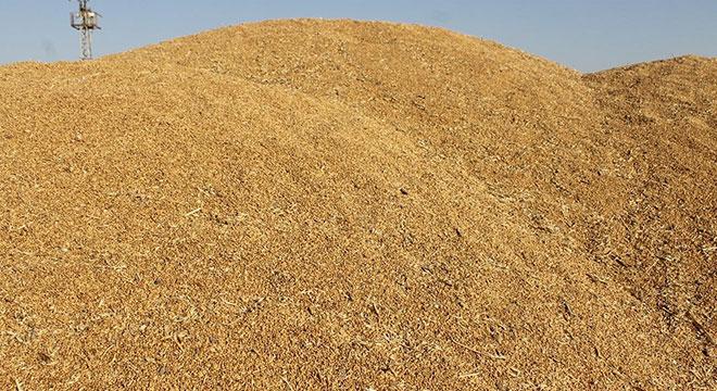 Bu yıl buğday eken çiftçi zarar etti