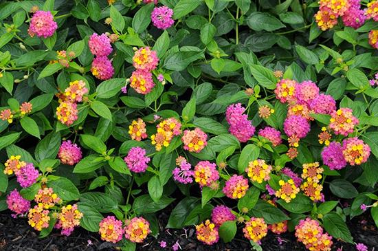 22 jenis tumbuhan pengisi yang biasa di gunakan pada taman vertikal