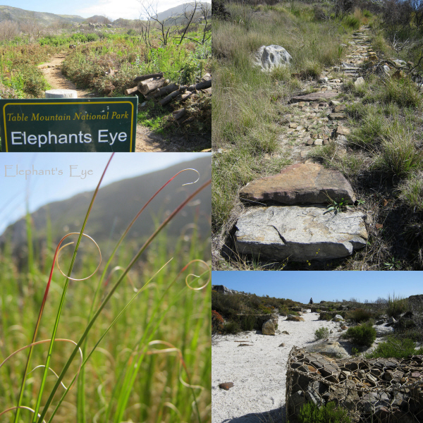 To Elephant's Eye cave, another time? Stone Path. Full circle grass. Gabion path.