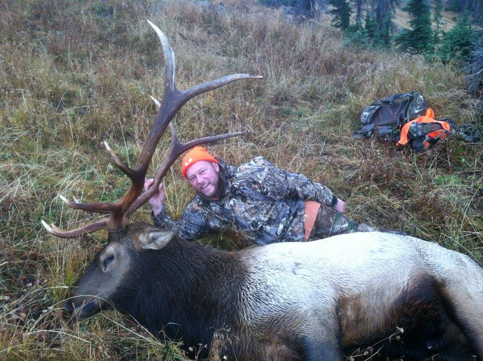 how much does a mature elk weigh