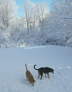 two senior dogs playing in snow