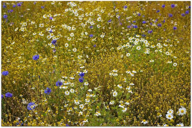 Plantas Naturales cuidar piel
