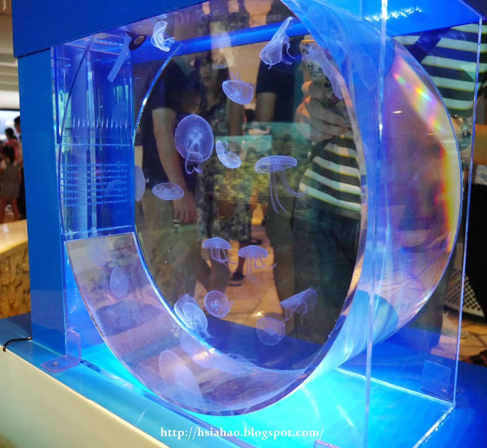 沖繩-海洋博公園-美麗海水族館-水母-景點-自由行-旅遊-旅行-okinawa-ocean-expo-park-Churaumi