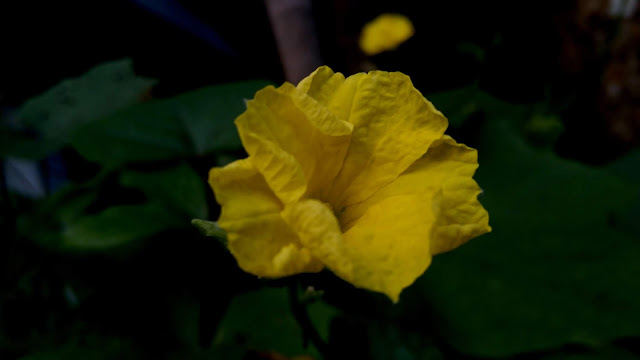 Yellow Flower With Beautiful Green Leaf on Back Ground | From'S Photography