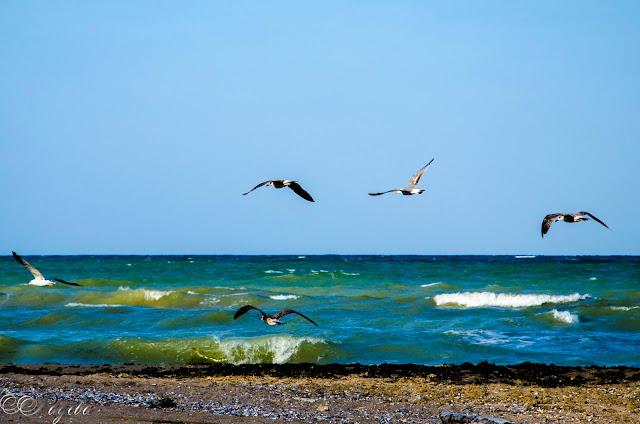 В-полет-над-морето-Flight-over-sea
