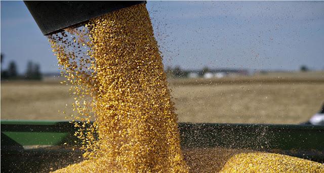 Grain Storage Tips