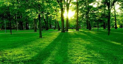 Espacios naturales, bosque