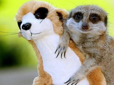 happy animal facts