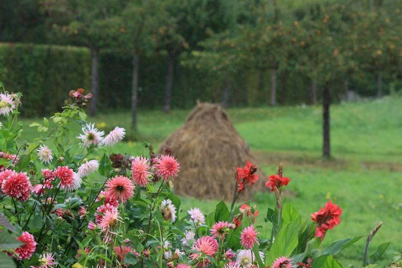 Flores de dalias y Canna en Jardin Claude Monet en Giverny en otoño