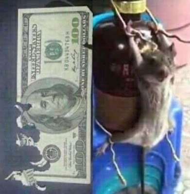 Rat punished for eating $$$ Note