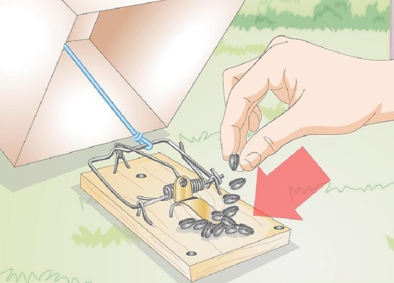 Son aşamada fare kapanından yaptığınız kuş tuzağını yemlemelisiniz.