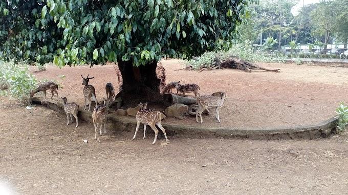 Mengunjungi Kebun Binatang Ragunan