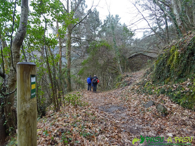 Bosque bajando al Puente de Castrillón