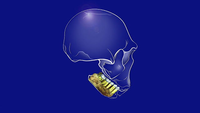 Nothing but the tooth: What dental remains from Homo naledi can tell us