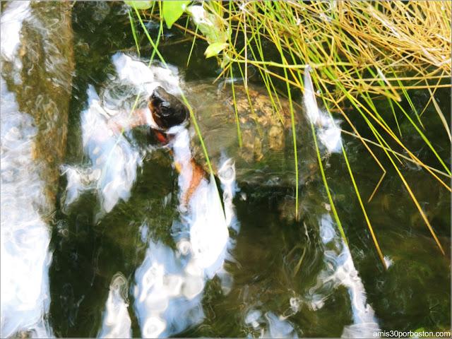 Selva Tropical del Biodôme: Tortuga Terrestre de Patas Rojas