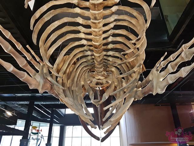 Esqueleto de Baleia Jubarte