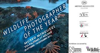 Wildlife_Photographer_of_the_Year_Milano