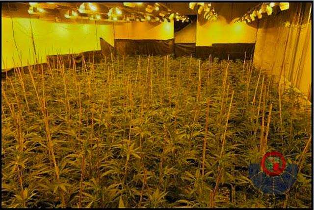 detención plantación marihuana