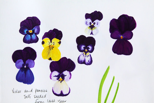 sketchbook, markers, flowers, sketching, drawing, pansies, violas, Anne Butera, My Giant Strawberry