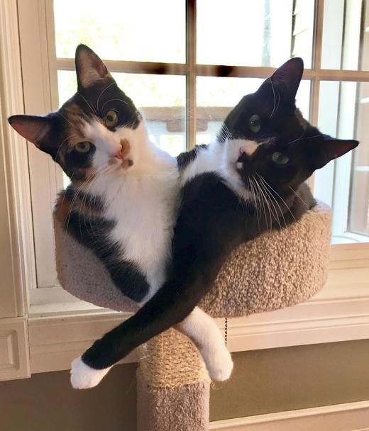 смешные коты Фиона и Саймон