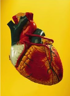 Blood Flow in Heart's Upper Chaamber